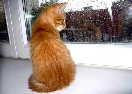 шумит дождь