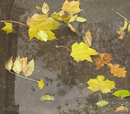 Под осенним дождём
