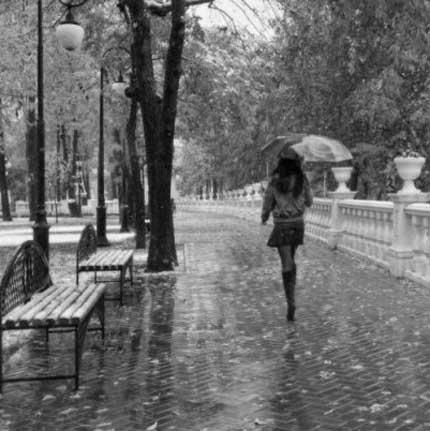 стихотворение Дождь