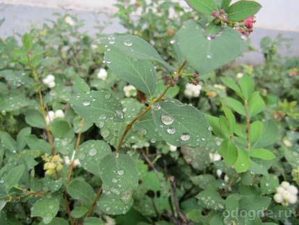 Тема дождя в творчестве Евгения Харланова