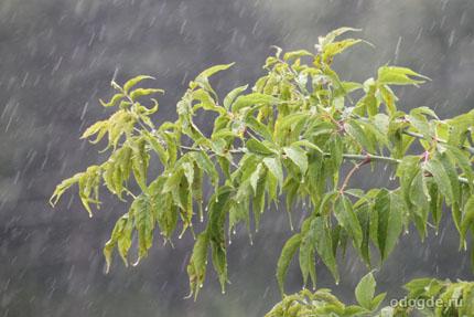 Классификация дождей