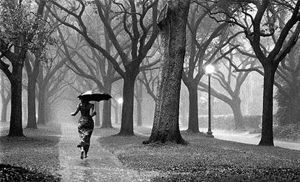 Волчий дождь