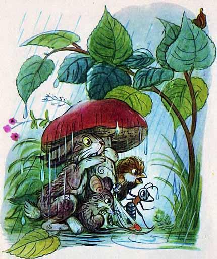 дождь и гриб