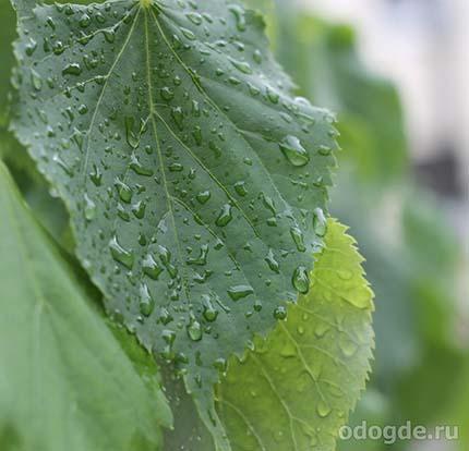 дождь лил