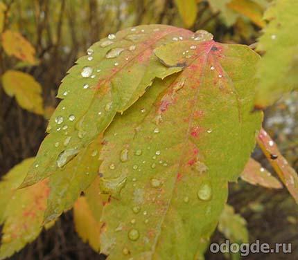 шел осенний дождь