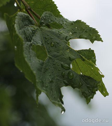 Проблема кислотных дождей
