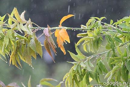 серые капли дождя